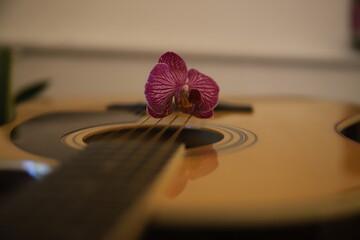 Fototapeta kwiat Piękna gitara akustyczna gryf drewno struny gitarzysta obraz