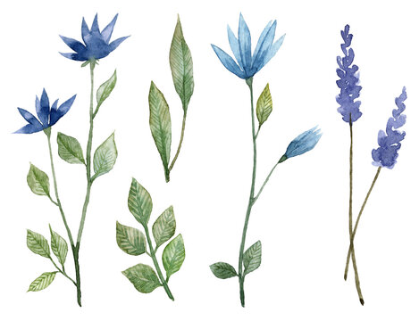 Set of hand painted watercolor blue flowers. Botanical illustration