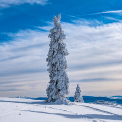 Fototapeta Beskidy zimą