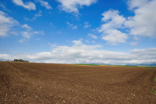 Agriculture, plowed field, ready to grow with summer plants, cotton, corn
