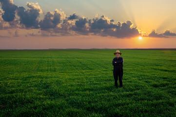 Fototapeta Senior farmer standing in green wheat field at sunset.