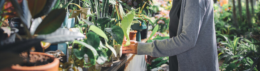 Obraz Asian owner woman gardening and working in greenhouse, Small business entrepreneur concept - fototapety do salonu