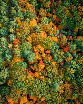 Aerial View of trees looking like abstract colored broccoli during Fall season in Wendell Forest, Massachusetts, USA
