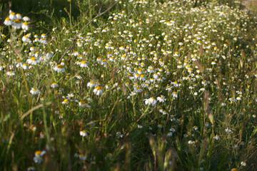 łąka rośliny wiosna trawa natura zieleń - fototapety na wymiar