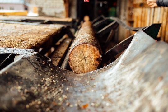 a log on a conveyor belt. transportation of wood raw materials at the plant. wood processing on a sawmill. automated conveyor