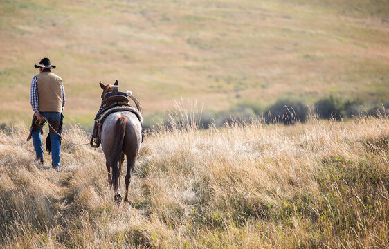 Rear view of cowboy leading horse through field