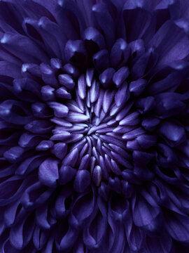 Abstract dahlia background with strange petals shape