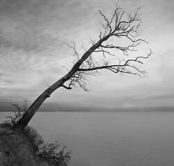 Drzewo z widokiem na morze - fototapety na wymiar