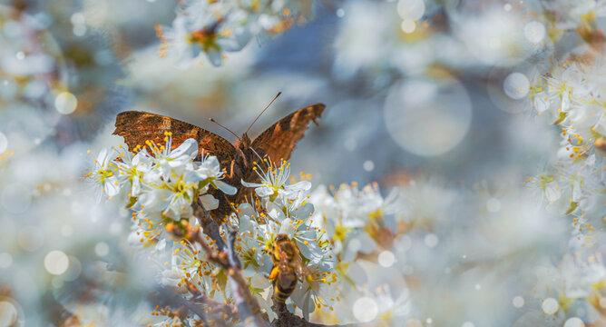 Beautiful Butterfly in Spring garden
