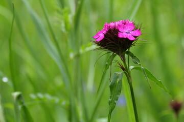 Obraz Piękny różowy kwiatek - fototapety do salonu