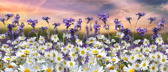 blue sky dramatic clouds at gold sunset at sea wild flowers daisy field seascape summer nature landscape sunbeam