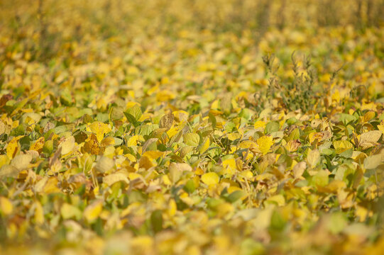 Selective focus shot of a yellow field with grass and small plants on a sunny day
