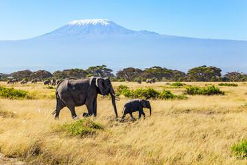 Fototapeta Journey to the African savannah