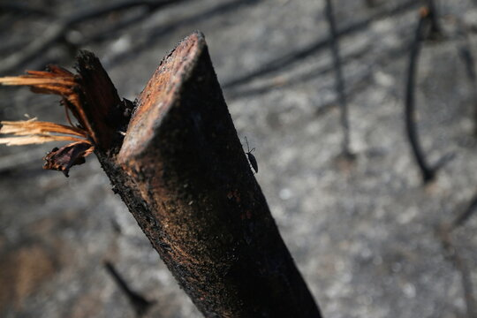 An insect climbs up the trunk of a burned tree in a deforested area in the Yari plains, in Caqueta