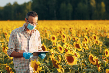 Fototapeta Man farmer agronomist in gloves and face mask at sunflower field with tablet checking harvest