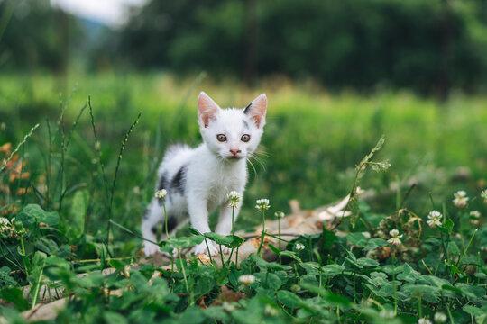 Portrait Of Kitten On A Field