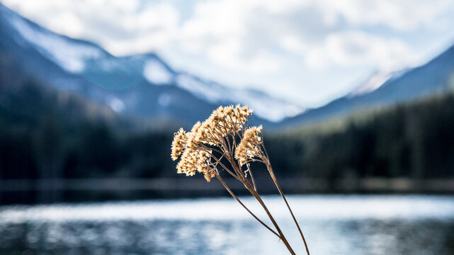 Close-up Of Wilted Plant By Lake Against Sky