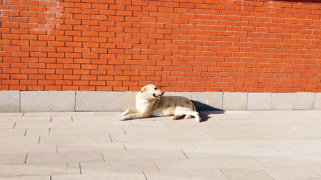 Dog Lying On Wall