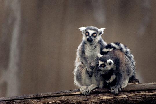 Ferrets Sitting On Wood