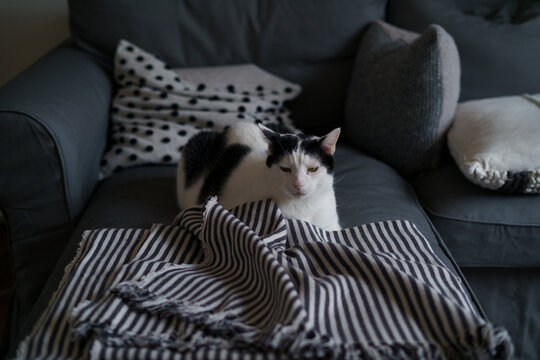 Cat Lying On Sofa At Home