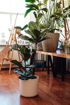 No people photo of a modern living room furnished with houseplants