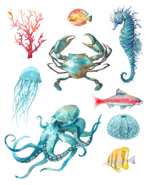 Watercolor sea animals poster: crab, octopus, jelly fish, coral and seahorse. Blue and red nautical creatures isolated on white background. Underwater clipart