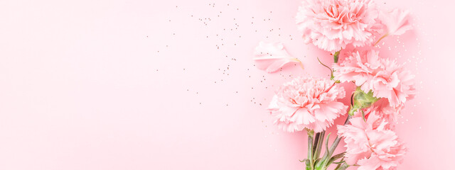 Pink carnations on pink background. Banner with flowers in pastel colours.