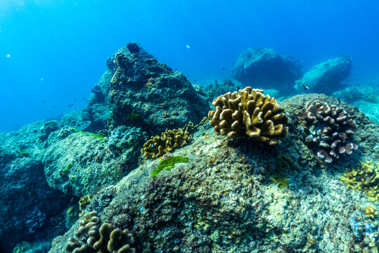 underwater scene with coral reef and fish; Surin Islands; Thailand.