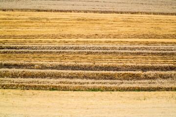 Obraz Full Frame Shot Of Agricultural Field - fototapety do salonu