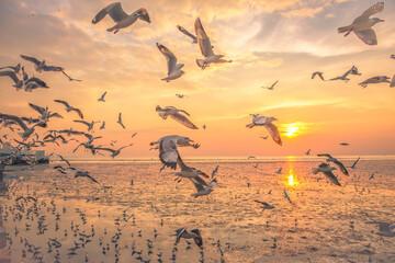 Fototapeta Birds Flying Over Beach During Sunset