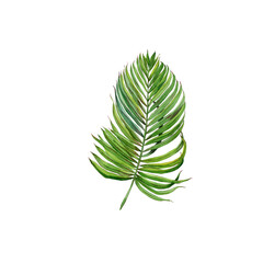 tropical leaves. Jungle, botanical watercolor illustrations, floral elements, palm leaves.