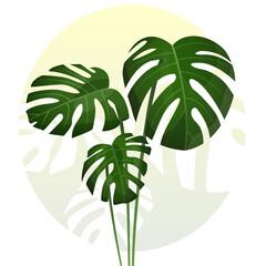 Monstera - egzotyczne liście. Botaniczna ilustracja tropikalnej rośliny na jasnym gradientowym tle.