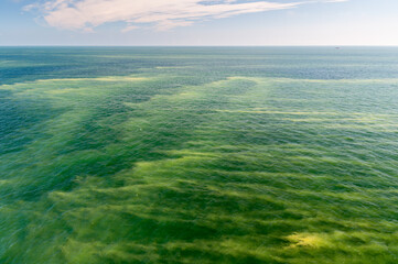 Fototapeta Kwitnące sinice w Morzu Bałtyckim / Blooming cyanobacteria in the Baltic Sea