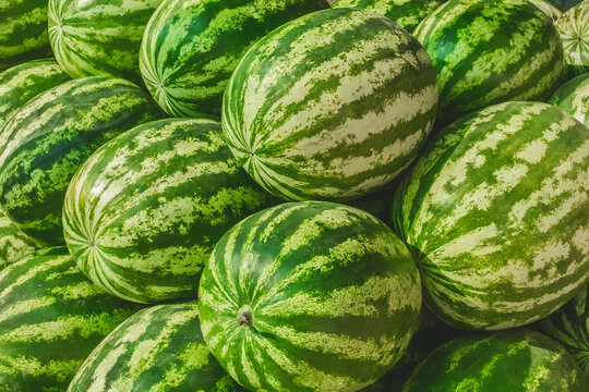 Heap of fresh green watermelons on the background market, close-up