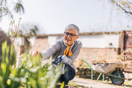 Portrait of a smiling retired woman gardening in her backyard.