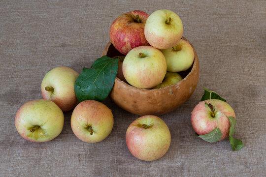 Honey crisp apples on brown tablecloth, Autumn harvest in California concept