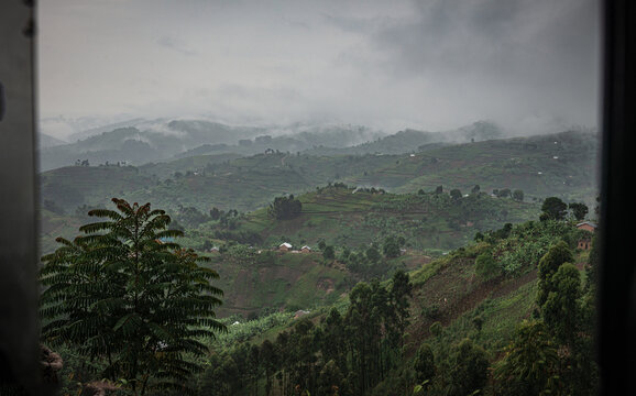 Bwindi Impenetrable Forest, Uganda, Africa
