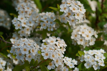 Obraz kwiat roślina natura płatki makro orzyroda wiosna - fototapety do salonu