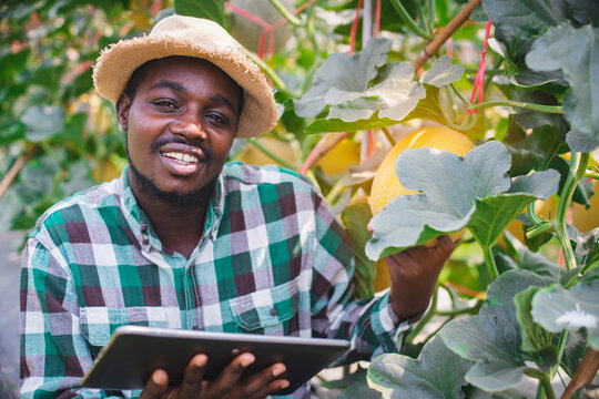 African farmer using tablet for research a lemon in organic farm.Agriculture or cultivation concept