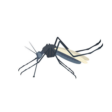 Mosquito. Insect mosquito, vector illustration