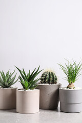 Fototapeta Different house plants in pots on grey table against white background, space for text