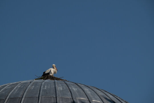 stork in a nest on the dome of a mosque