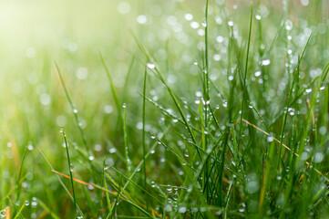 Obraz soczysta zielona trawa z kropelkami deszczu - fototapety do salonu