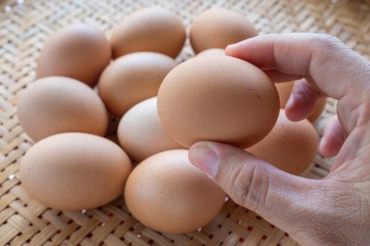 hand picking fresh chicken egg
