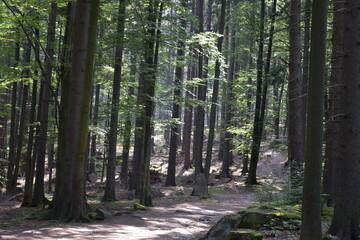 piękny górski las porośnięty drzewami liściastymi