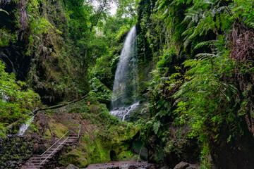 Cascada en bosque tropical.  Wall mural