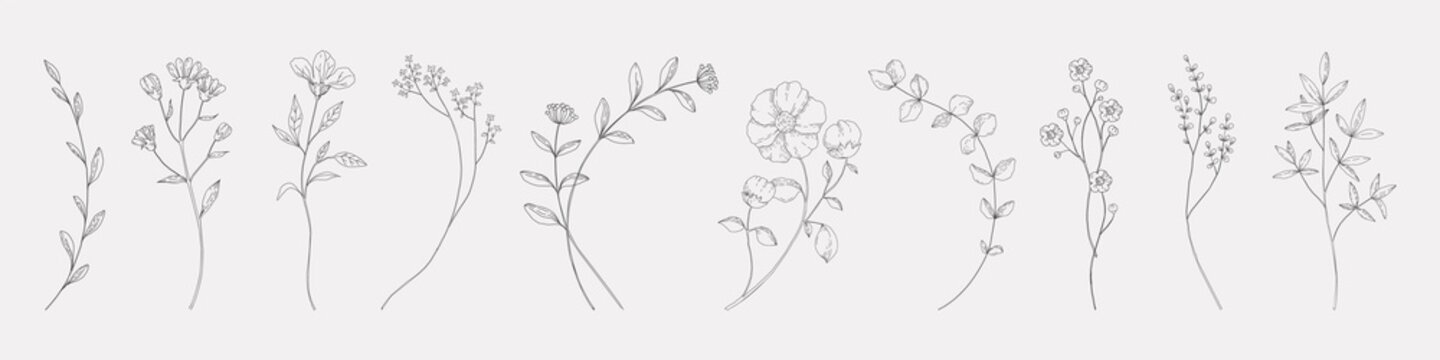 Hand drawn herbs. Minimal floral monograms. Blooming plants and branches with leaves. Row of contour flowers. Black and white decorative elements template. Vector foliage sketch set