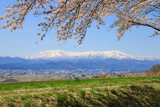 南原堤の桜と飯豊山(福島県・喜多方市)