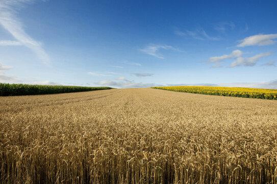 Agricultural landscape, Limagne plai, Puy de Dome, Auvergne-Rhone-Alpes, France