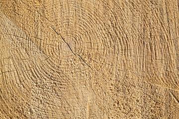 Wall Murals Firewood texture sawn wood texture